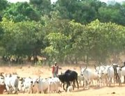 One Reported Dead As Herdsmen Invade Community In Cross River